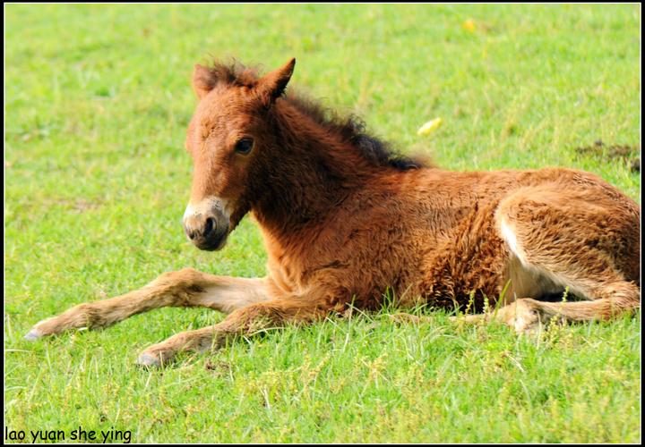 类型: 羽翼独角小马驹   外型:红色的头发,白色的身体,标志是类似雪花