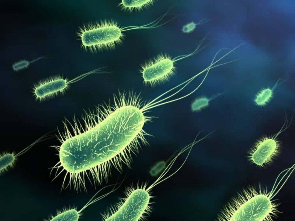 微 生物 微 生物 微 生物 microorganism 简称 microbe 是