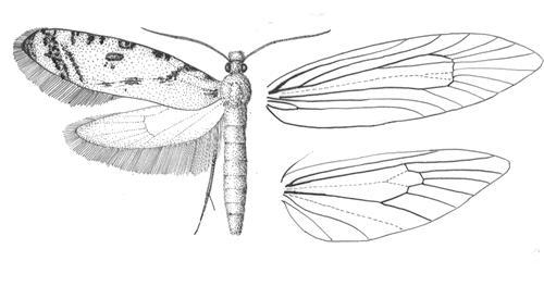壁纸 简笔画 昆虫 手绘 线稿 桌面 500_263