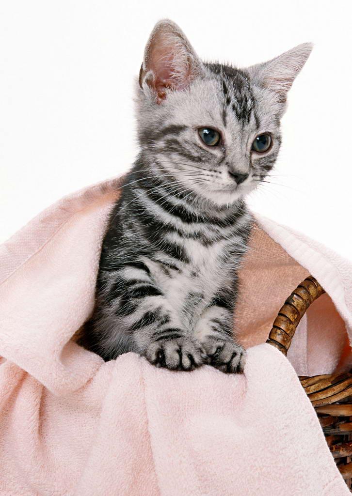 猫(食肉目猫科动物) - 搜狗百科
