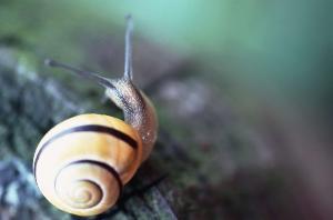 周杰伦做有歌曲《蜗牛》;另有《蜗牛诗》.图片
