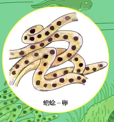两栖纲动物卵外包有2~3层的透明胶状保护膜