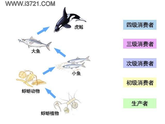 海洋食物链 - 搜搜百科