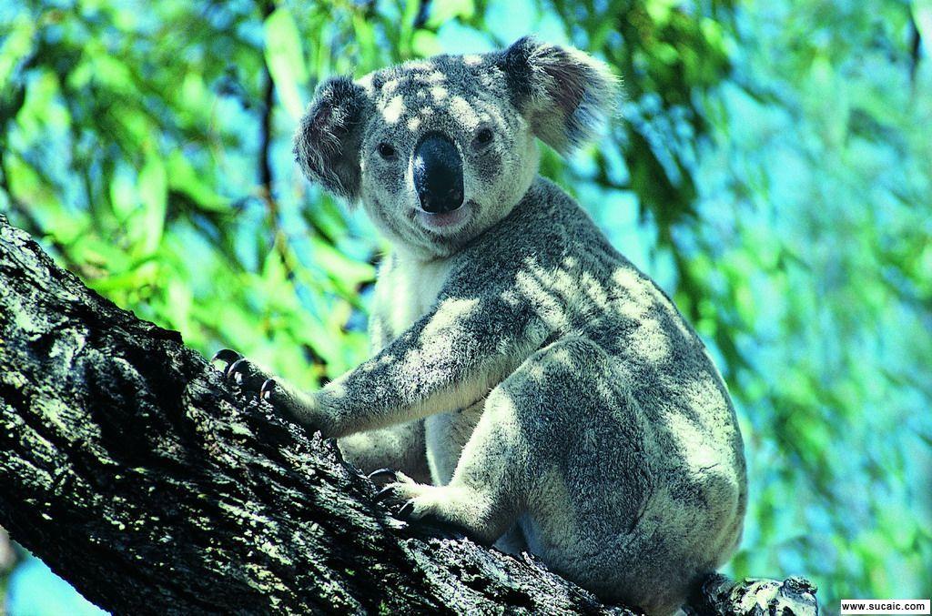 热带动物 - 搜狗百科