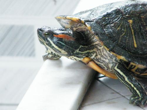 乌龟(动物名称) - 搜狗百科