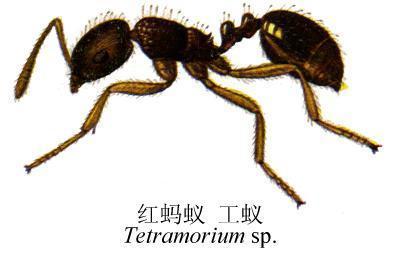 小动物蚂蚁排队图片