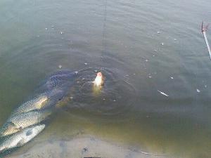 释义 [go fish ing;angle or fish with a hook and line] 使用鱼竿