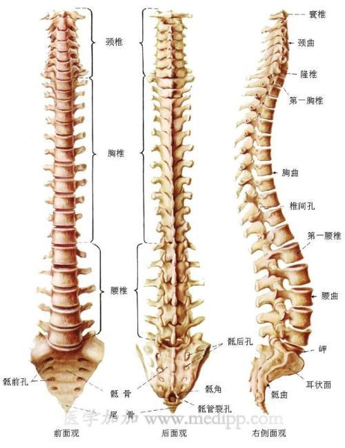以下食品可供腰椎间盘突出症患者平时选用