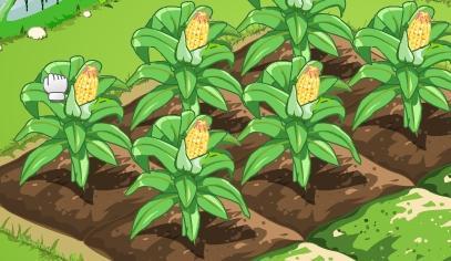种子发芽过程简笔画