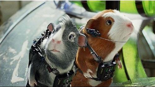 豚鼠特工队