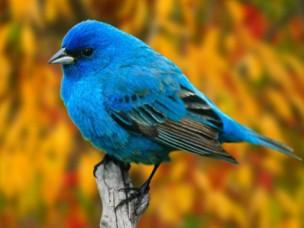 鸟(鸟纲动物的统称)