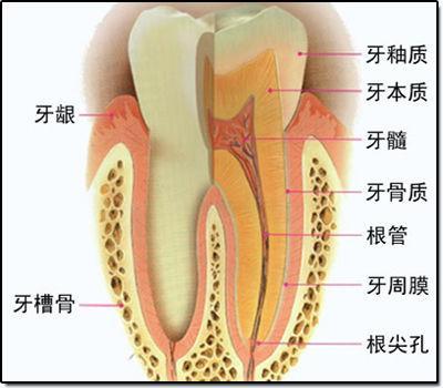 牙龈肿痛_牙龈肿痛怎么办