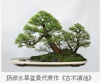 人参榕树盆景修剪视频