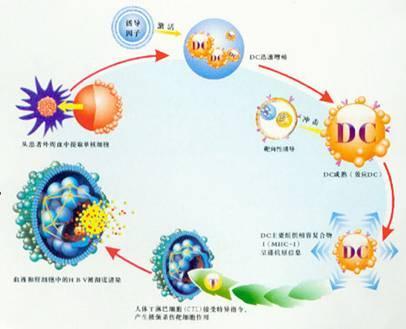 生物免疫DC细胞疗法 搜狗百科