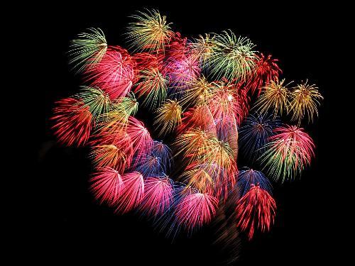 为凤翔著名的节日燃放的观赏娱乐品,是陕西一大百合.特产霜霉病图片