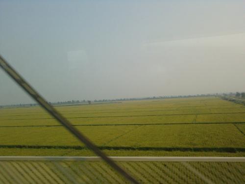 水稻,玉米,高粱