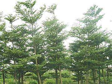 壁纸 树 360_270