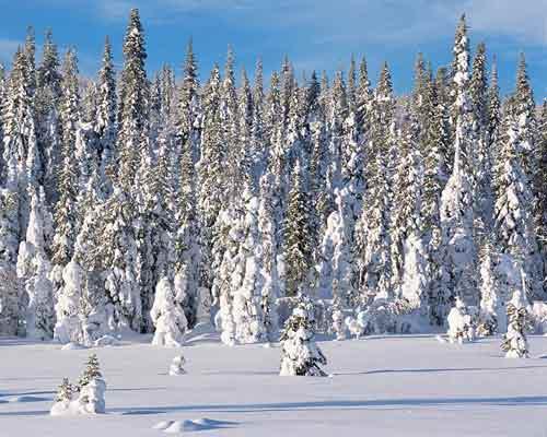 季节森林是热带湿润或者季节性的雨林,最初是在亚洲(印度/