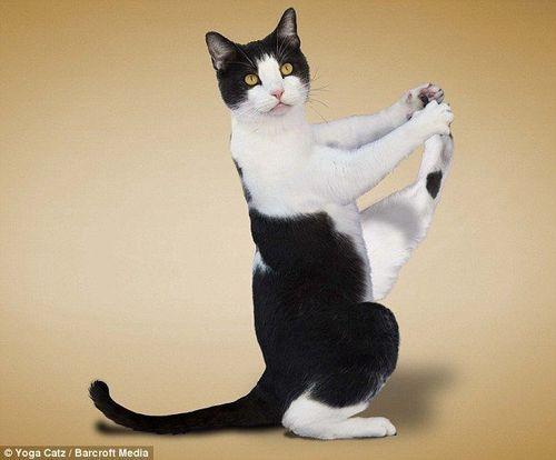 壁纸 动物 猫 猫咪 小猫 桌面 500_414