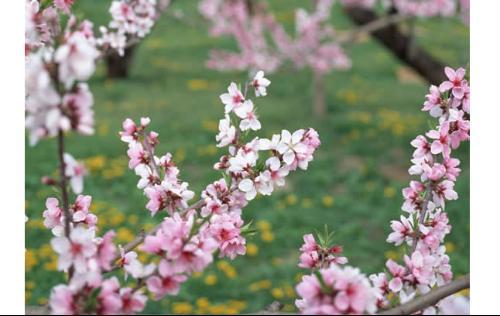 牡丹梅花玫瑰 图片