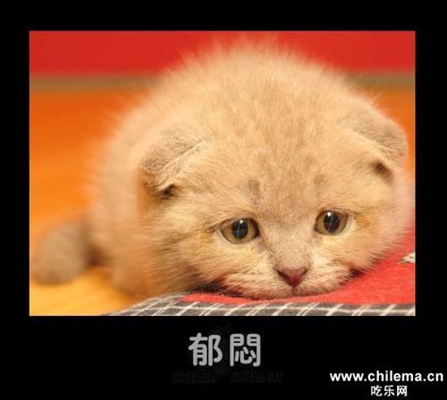 可爱猫烦躁图片