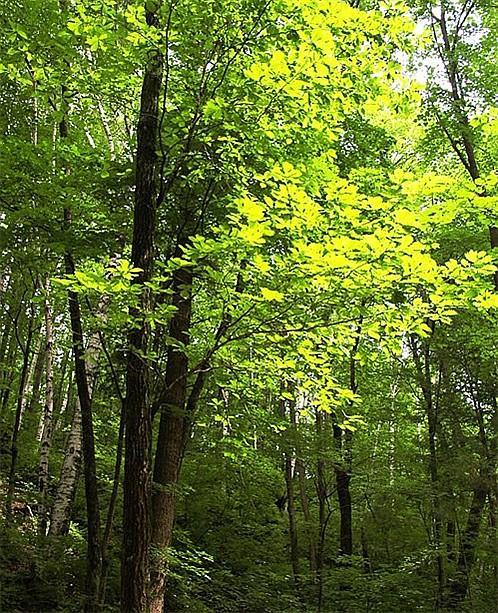 森林(植物) - 搜狗百科