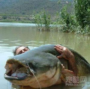 巨型哲罗鲑图片