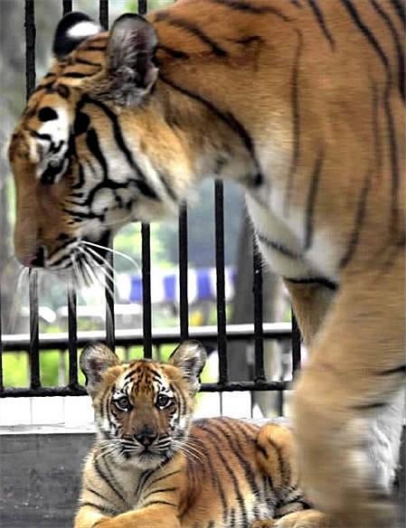 广州动物园 - 搜搜百科