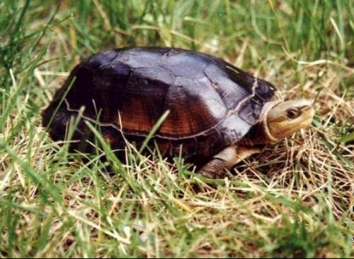 动物 龟 500_367