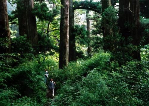 经济大树图片素材