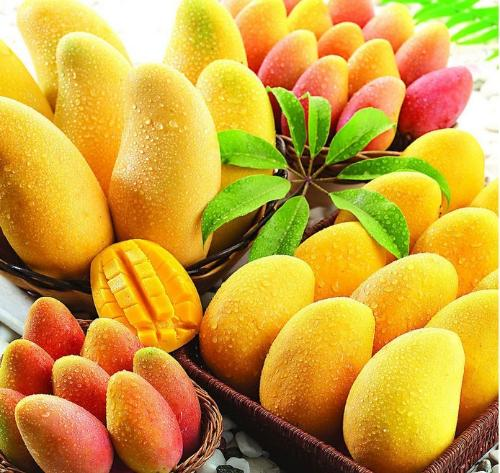 芒果色彩手绘图