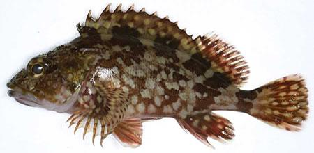 壁纸 动物 鱼 鱼类 450_220