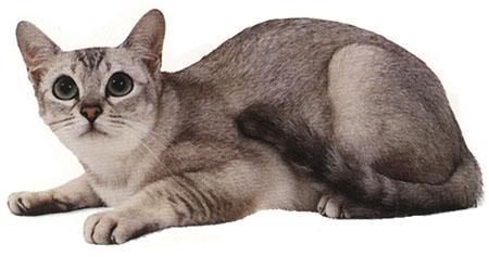 壁纸 动物 猫 猫咪 小猫 桌面 450_237