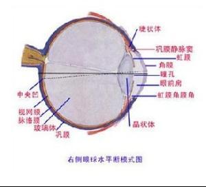巩膜筛板结构
