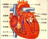 心脏血管前降支_301 Moved Permanently