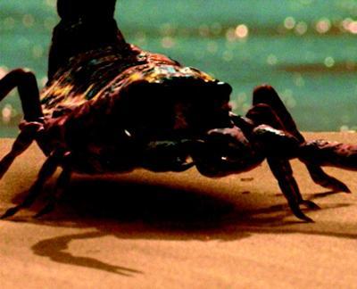 像蝎子的动物图片