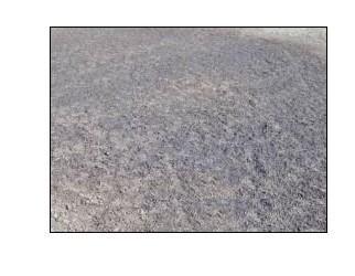 细菌破伤风梭郡芽孢手绘图片