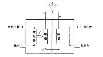 微生物燃料电池工作原理图