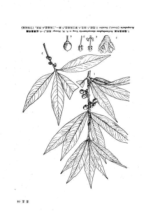 灌木立面手绘线稿图片