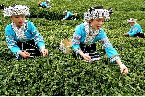 手绘苗族采茶图片