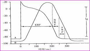高钾血症和低钾血症对心肌兴奋性各有何影响?阐明其机理.