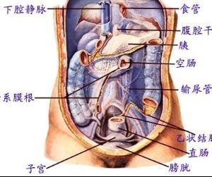 膀胱子宫陷凹