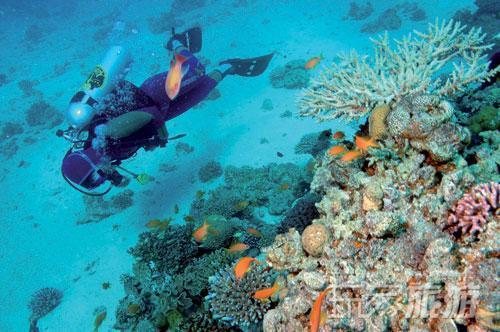 壁纸 海底 海底世界 海洋馆 水族馆 桌面 500_332