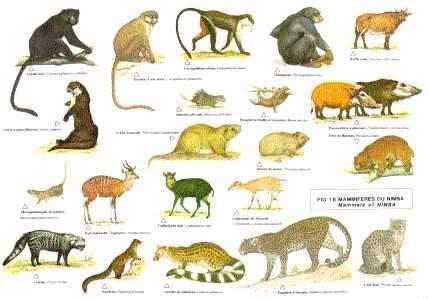 濒临灭绝的动物