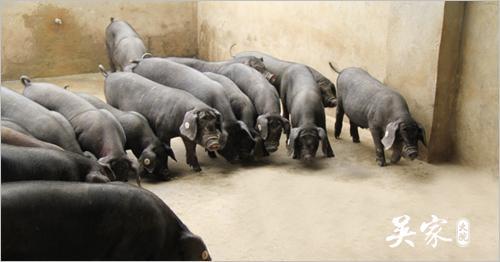 养猪企业办公楼效果图