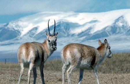 中国国家一级保护动物