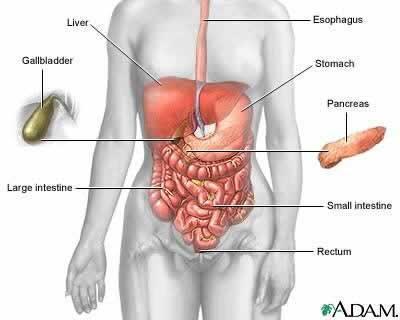 肠子部位图解