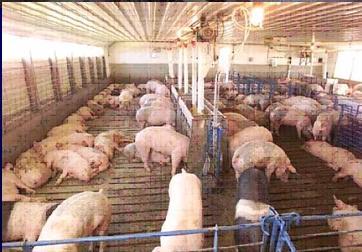 100头小型养猪场设计图