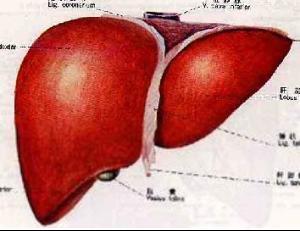 但晚期患者因癌细胞扩散而治愈率较低,因此要做到肝癌的早期发现,早期