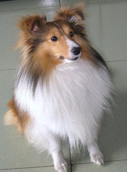 白鼻心怎么歪一边--是不是杂到土狗;为什么这只小狗是黑色的,喜乐蒂不